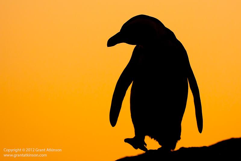 800x533 Creating Wildlife Silhouettes
