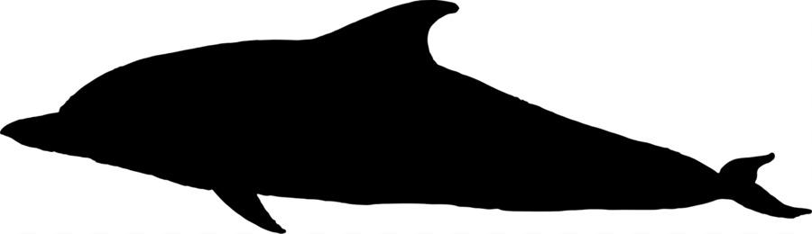 900x260 Dolphin Porpoise Black And White Fauna