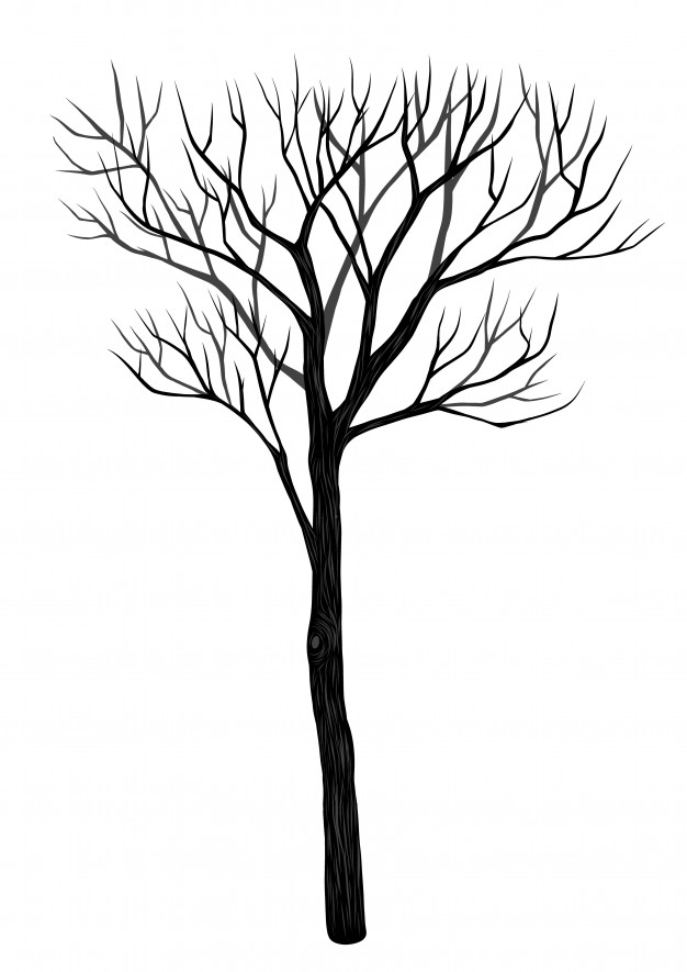 626x885 Fir Tree Vectors, Photos And Psd Files Free Download