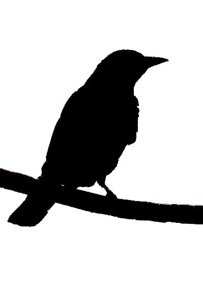 399x600 Bird Silhouette