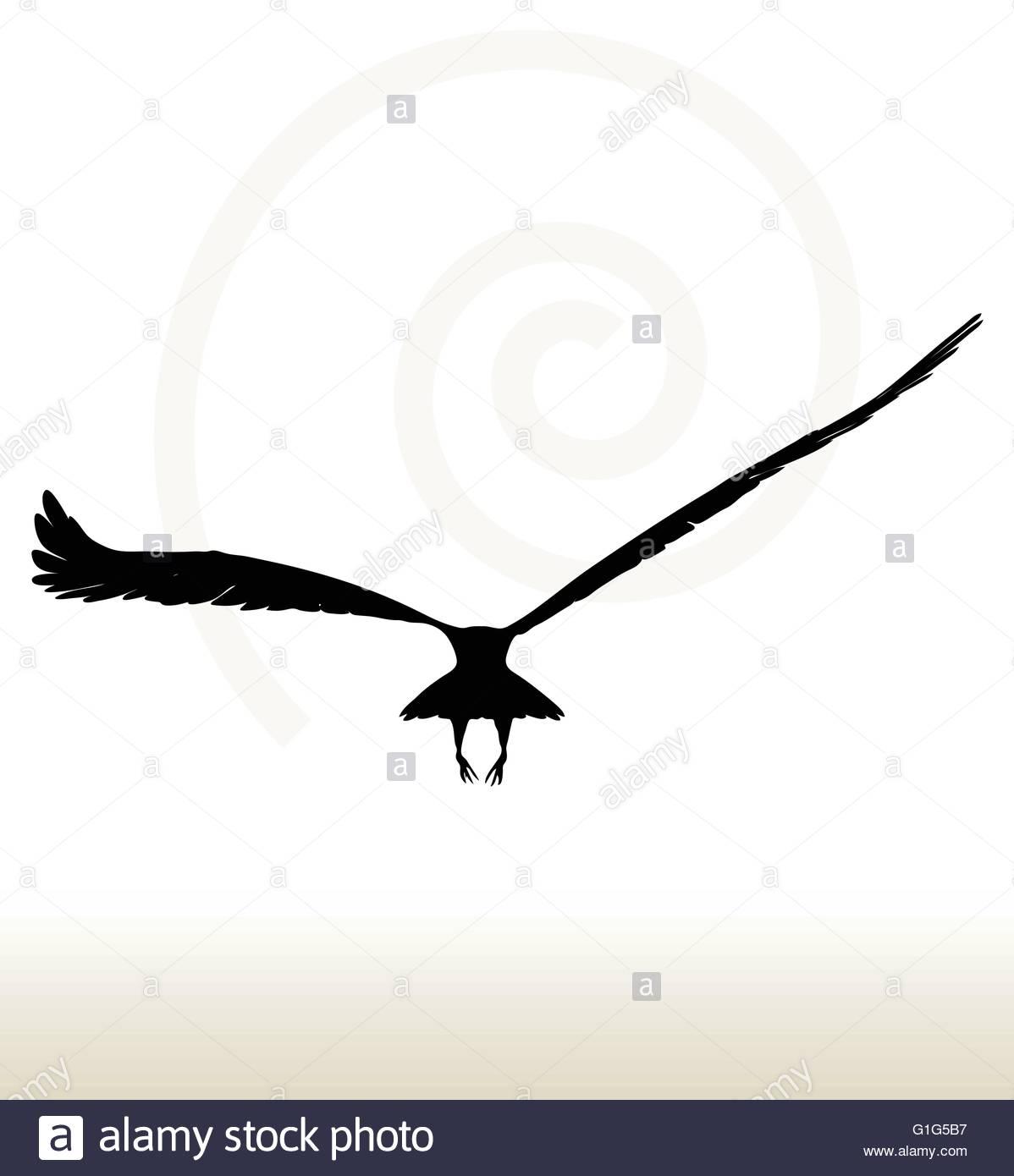 1198x1390 Sparrow Hawk Flying Stock Photos Amp Sparrow Hawk Flying Stock