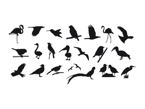 491x368 Sparrow Free Vector Download (41 Free Vector) For Commercial Use