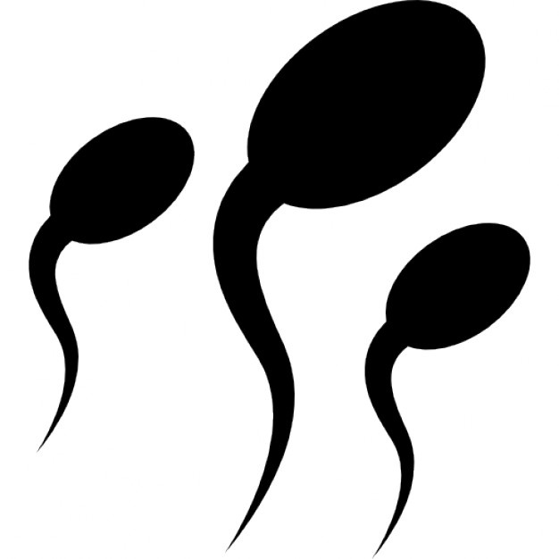 626x626 Sperm Vectors, Photos And Psd Files Free Download