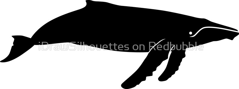 800x298 Humpback Whale Silhouette (Black) Canvas Prints By