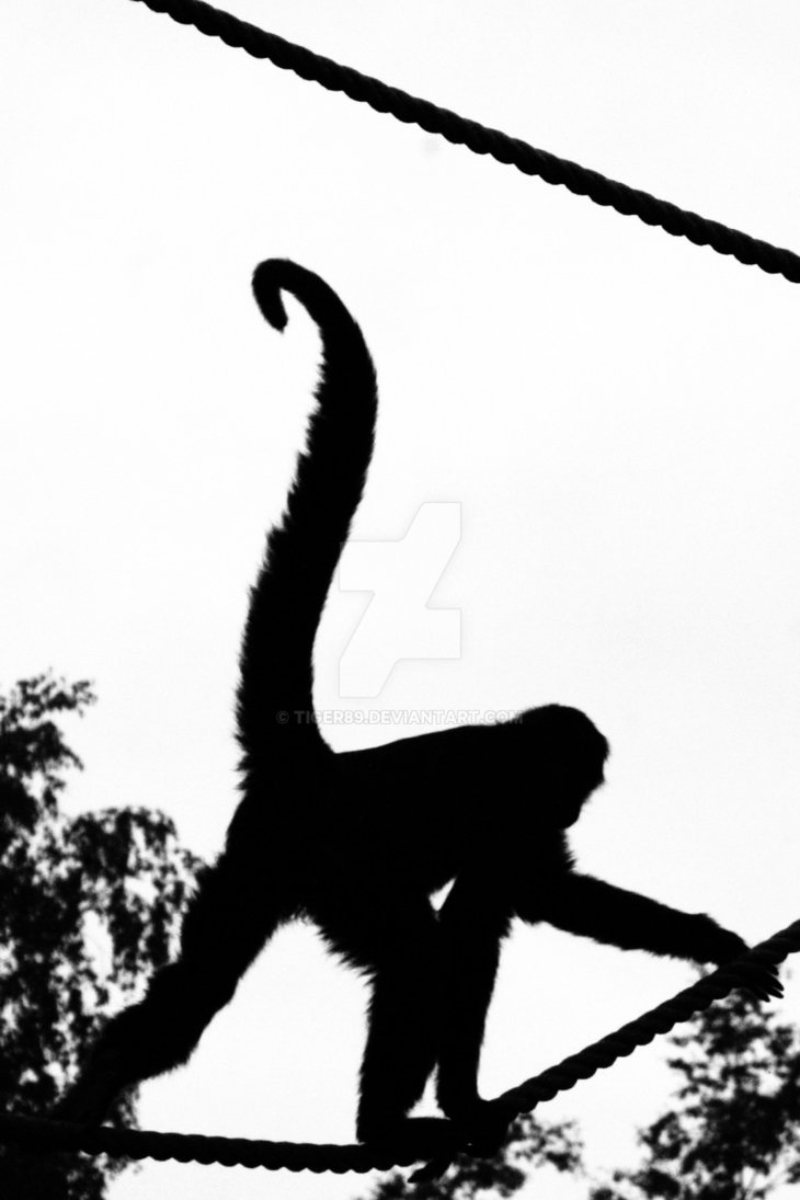 730x1095 Monkey Silhouette By Tiger89