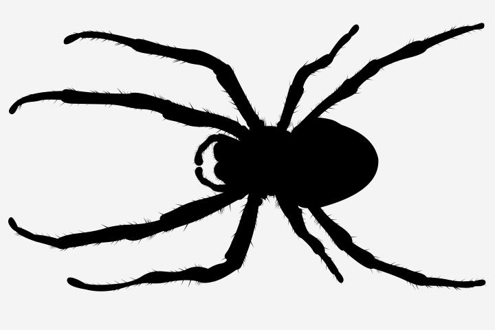 720x480 15 Brilliant Spider Crafts For Preschoolers