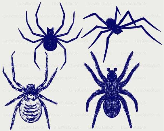 570x456 Spider Svgtarantula Spider Clipartspider Svgspider Silhouette