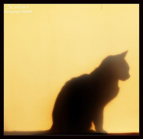 Spooky Cat Silhouette