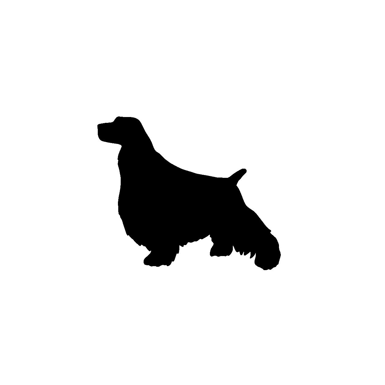 1260x1260 English Springer Spaniel