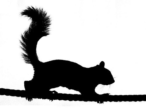 Squirrel Silhouette Images