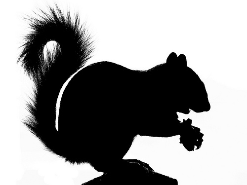 Squirrel Silhouette Vector