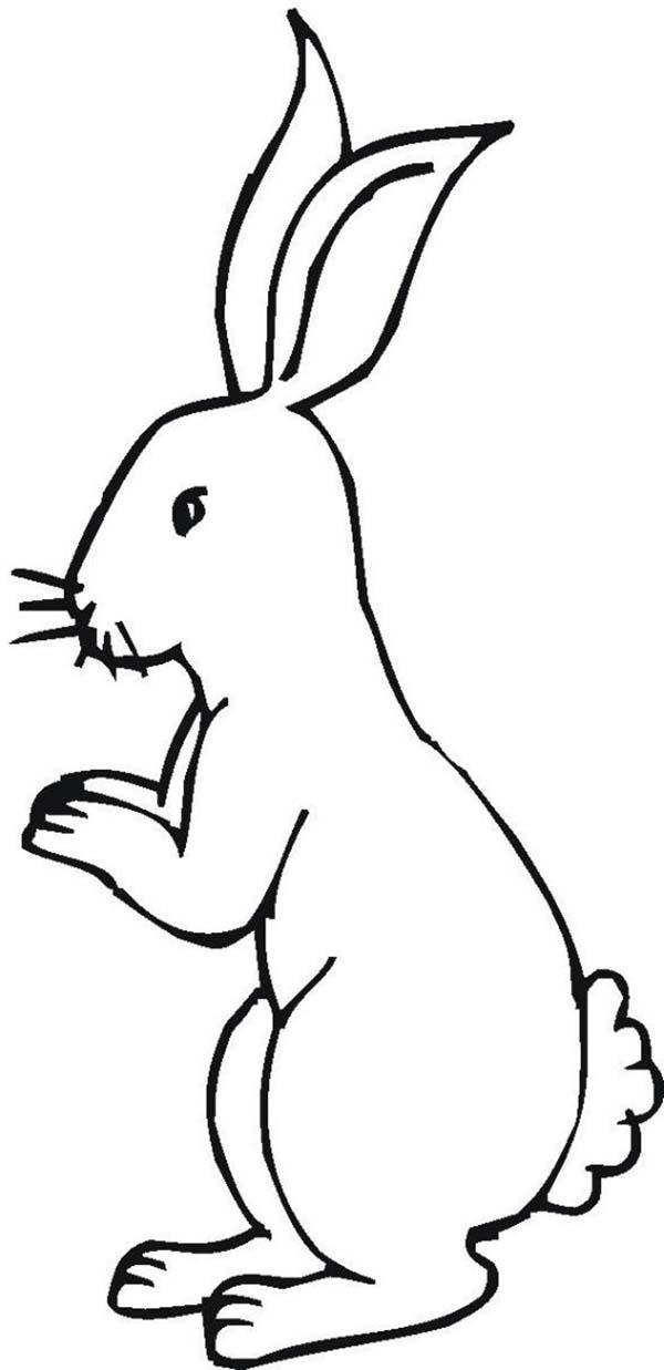 Standing Rabbit Silhouette