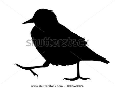 450x349 Vector Silhouette Of The European Starling Walking. Starling