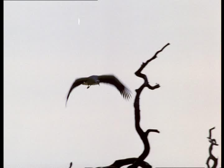 720x540 White Stork Silhouette Sd Stock Video 906 064 520 Framepool