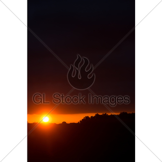 325x325 Abstract Landscape With Flying Swallows In Sunrise Or Sun Gl
