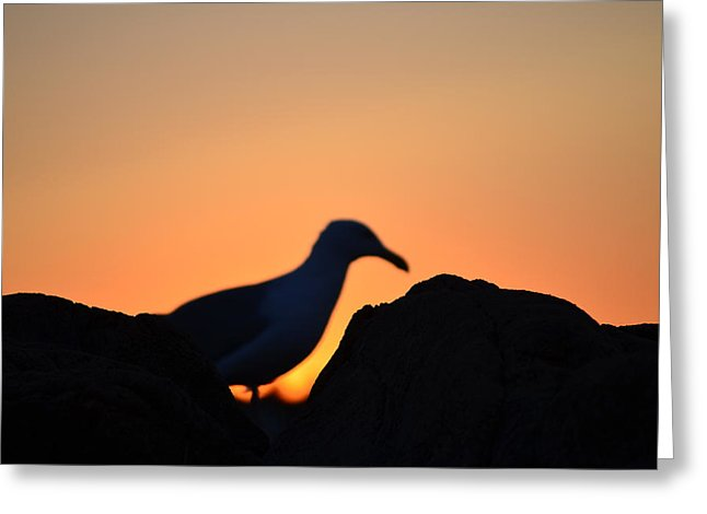646x470 Seagull Sunrise Silhouette Photograph By Eric Soderman