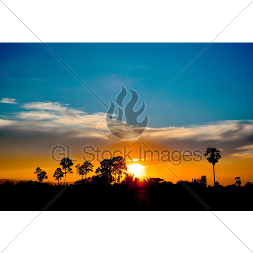 500x500 Silhouette Of Tree Mountain During Sunset Gl Stock Images