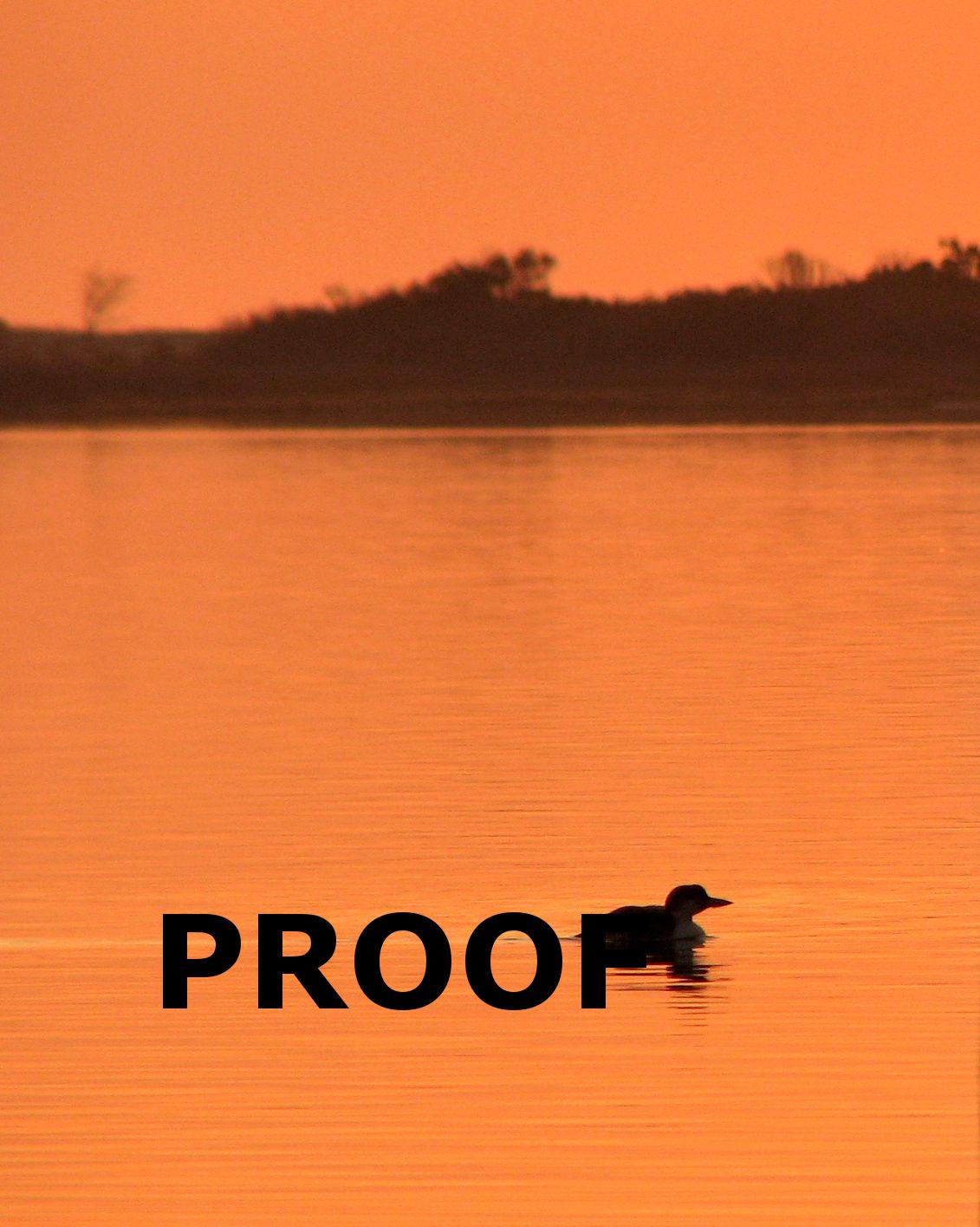 1131x1415 Sunrise Loon Silhouette Proof