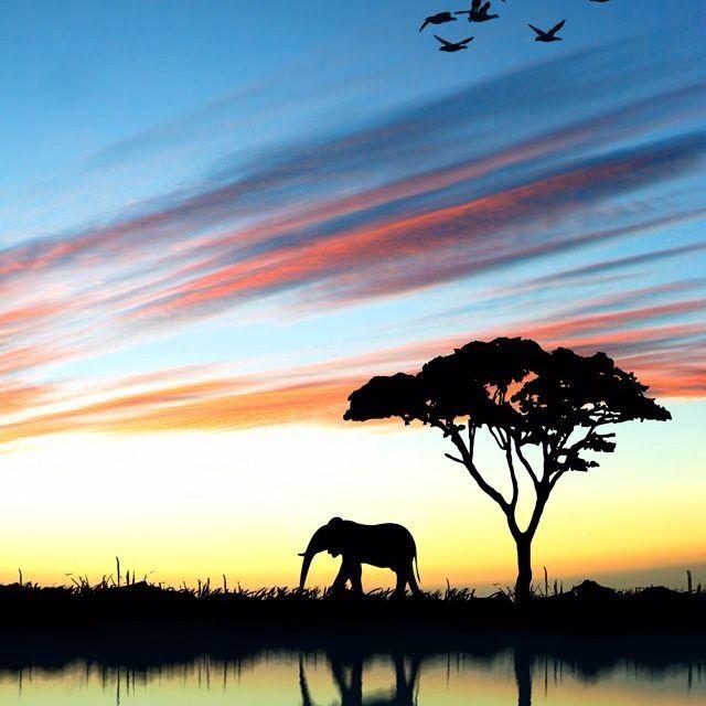 640x640 Elephant Silhouette Elephant Silhouette Elephant