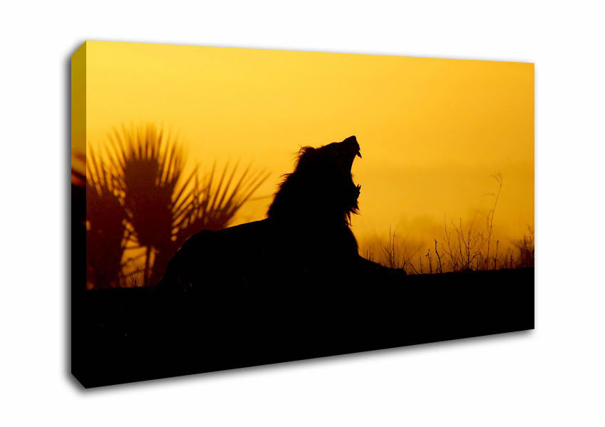 849x599 Sunset Wide Panel Lion Roar Silhouette Canvas Prints