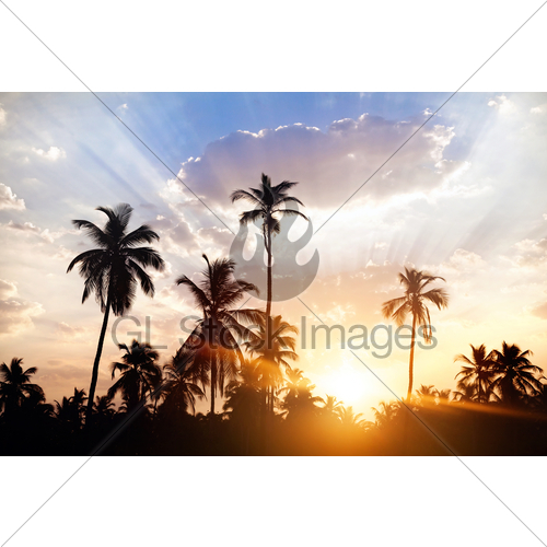 500x500 Palm Tree Silhouettes At Sunset Gl Stock Images