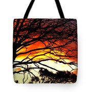 180x180 Sunset Tree Silhouette Photograph By The Creative Minds Art