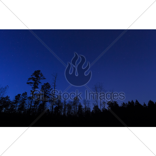 500x500 Tree Line After Sunset Gl Stock Images