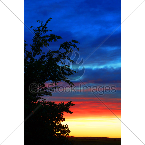500x500 Vertical Sunset And Tree Silhouette Gl Stock Images