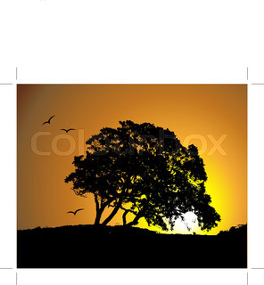 296x320 Black Silhouette Of Single Beautiful Big Oak Tree With Reflection