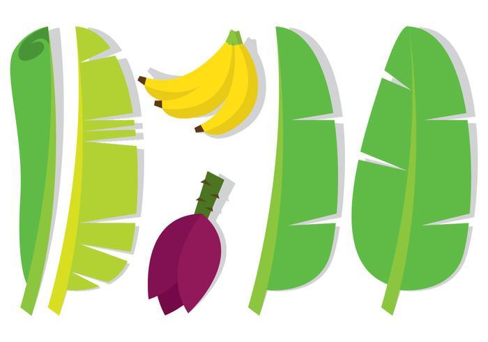 700x490 Banana Leaf And Fruit
