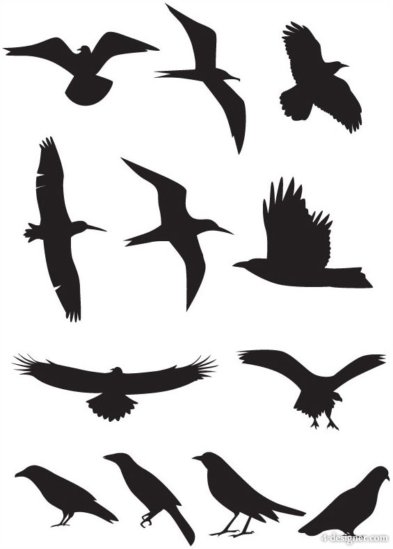 565x790 Bird Flying Silhouette Swallow