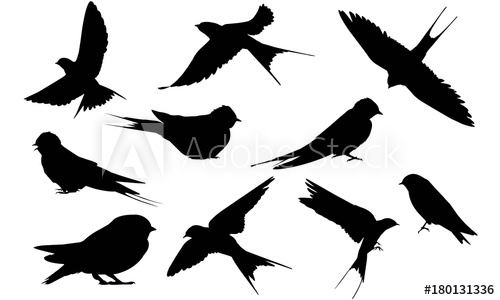 500x300 Swallow Silhouette Vector Graphics