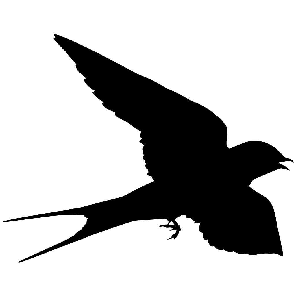 1024x1024 Swallows And Swifts Browse By Shape, All About Birds, Cornell Lab