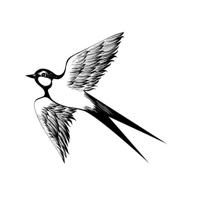 626x626 Swallow Vectors, Photos And Psd Files Free Download
