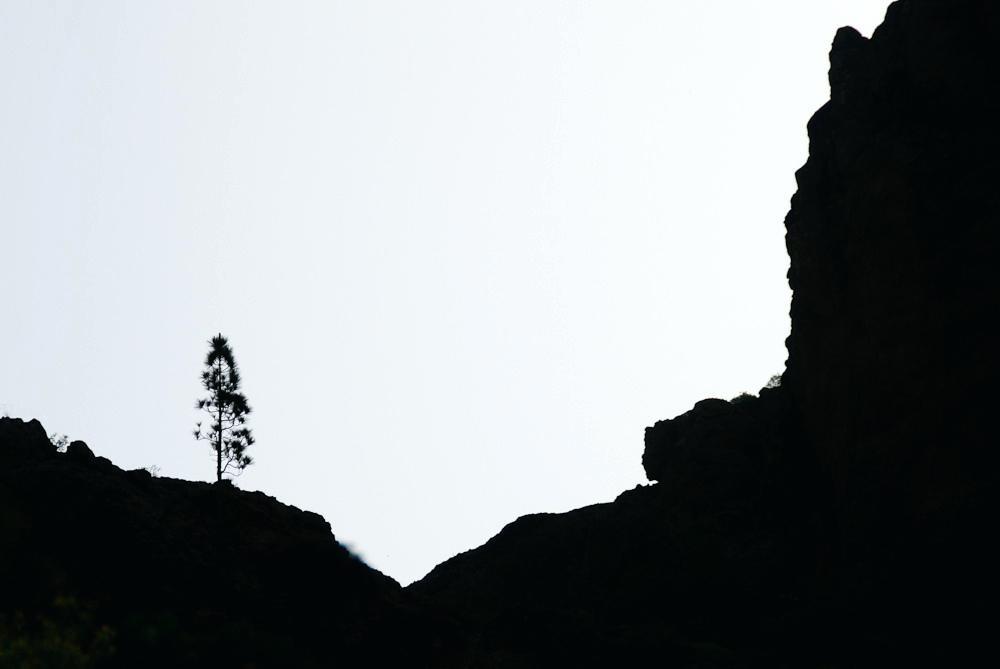 1000x669 Landscape Silhouette Sunrise Silhouette Swamp Dawn Landscape Tree