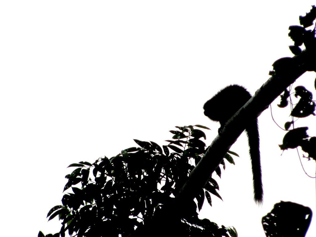 1024x768 March 2011 Tamarin Tales From Peru
