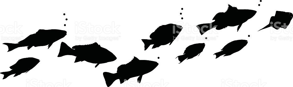1024x306 Different Types Of Swimming Fish Swimming, Vector Art And Fish
