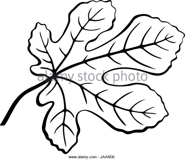 625x540 Fig Tree Silhouette Stock Photos Amp Fig Tree Silhouette Stock