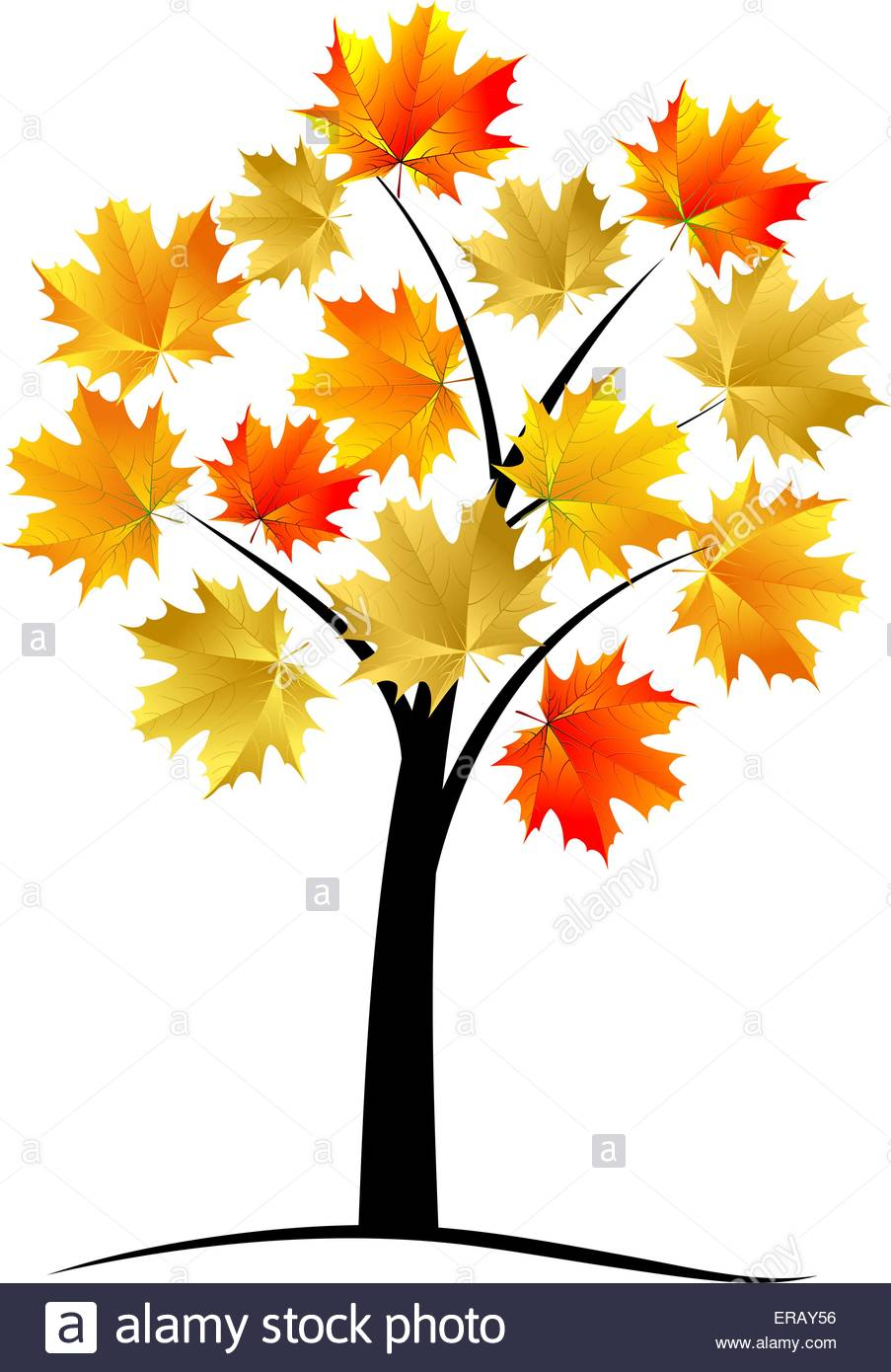 903x1390 Sycamore Tree Stock Vector Images