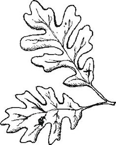 236x295 Sycamore Leaf Pattern. Use The Printable Outline For Crafts