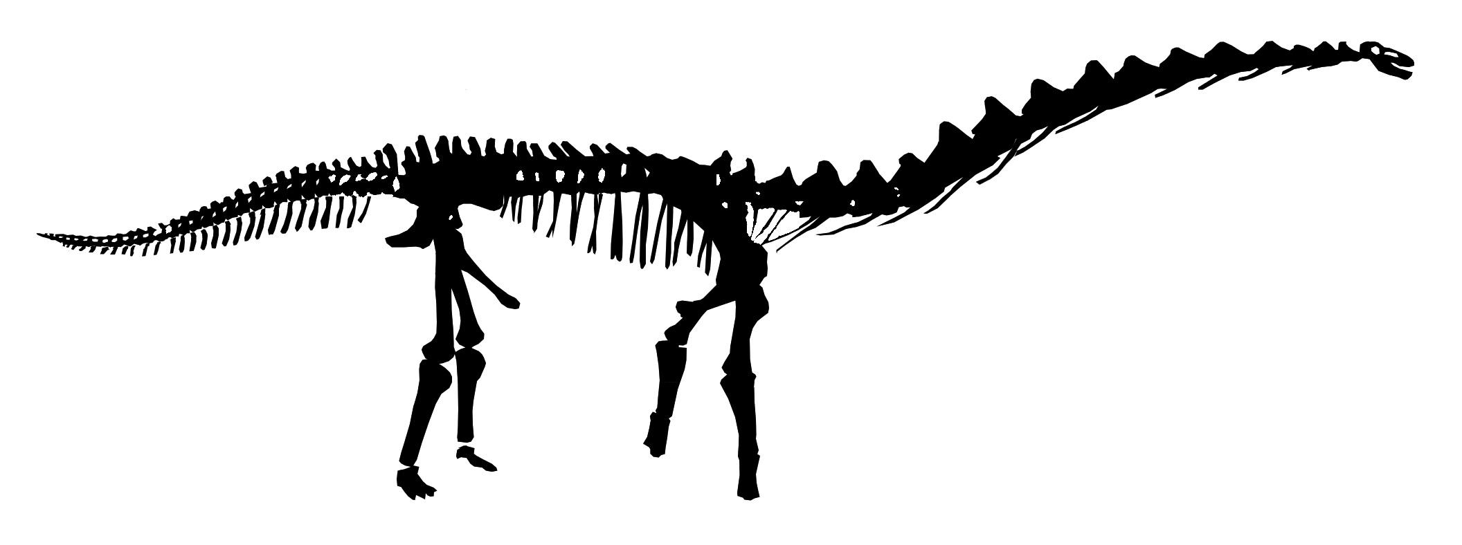 2112x788 Rapetosaurus Is Just Plain Wrong Sauropod Vertebra Picture