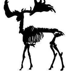 236x236 Tyrannosaurus Rex Skeleton Black Silhouettes