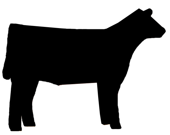 570x452 Steers Clipart
