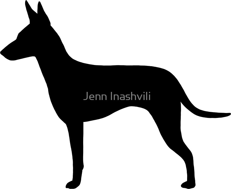 800x654 Manchester Terrier Silhouette(S) Stickers By Jenn Inashvili