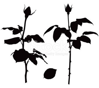 339x300 Rose Silhouettes Stock Vectors