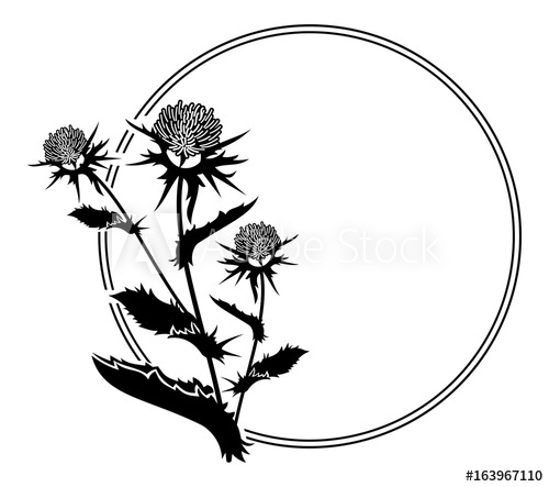 500x443 Round Frame With Thistle Silhouette. Vector Clip Art.