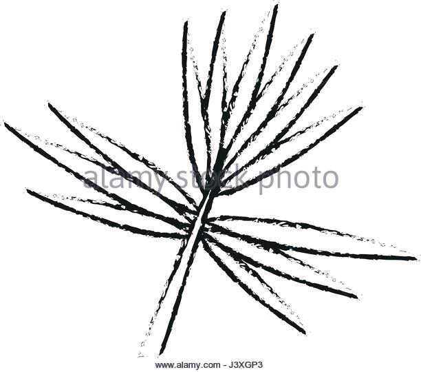 612x540 Branch With Thorns Stock Photos Amp Branch With Thorns Stock Images