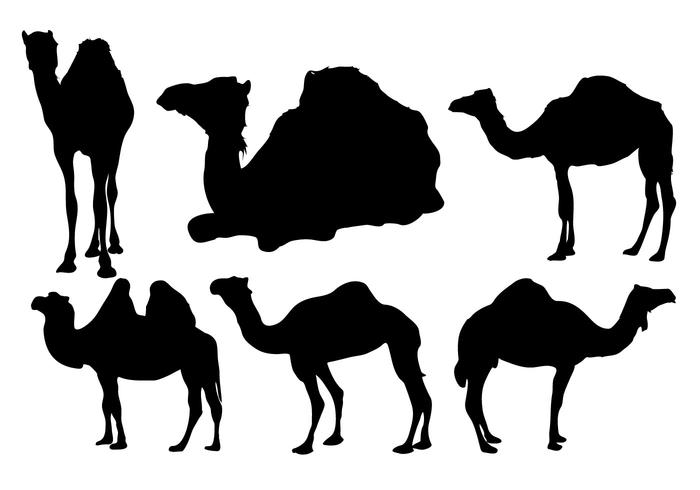 700x490 Free Camel Silhouette Vector