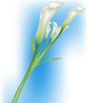 180x212 Lily Clip Art, Free Vector Lily