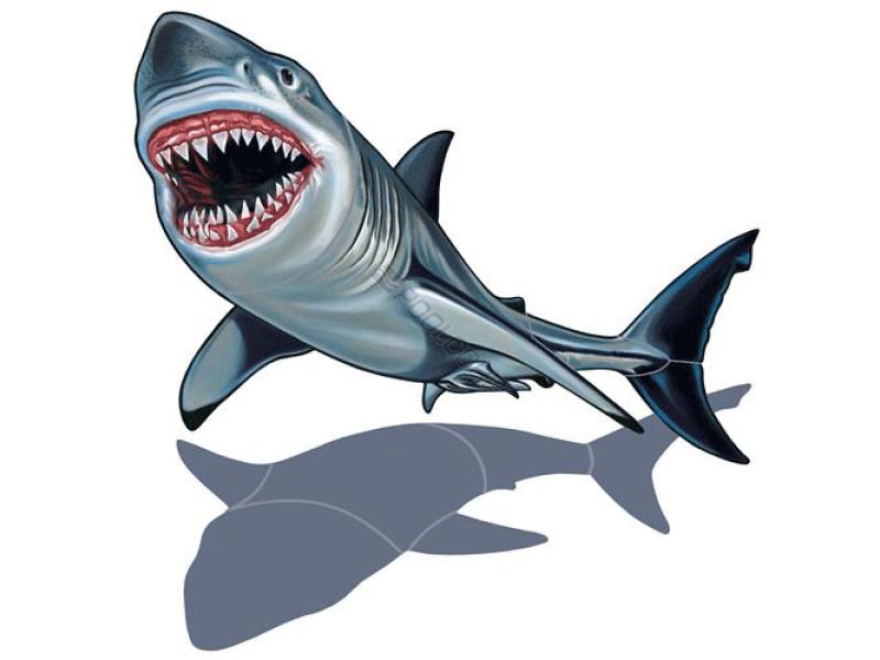 800x600 Great White Shark Clipart Mosaic